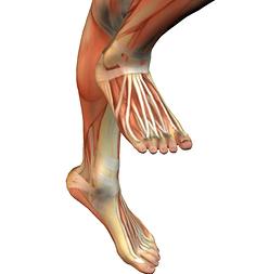 anatomyshins.jpg