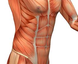 coreanatomy.jpg