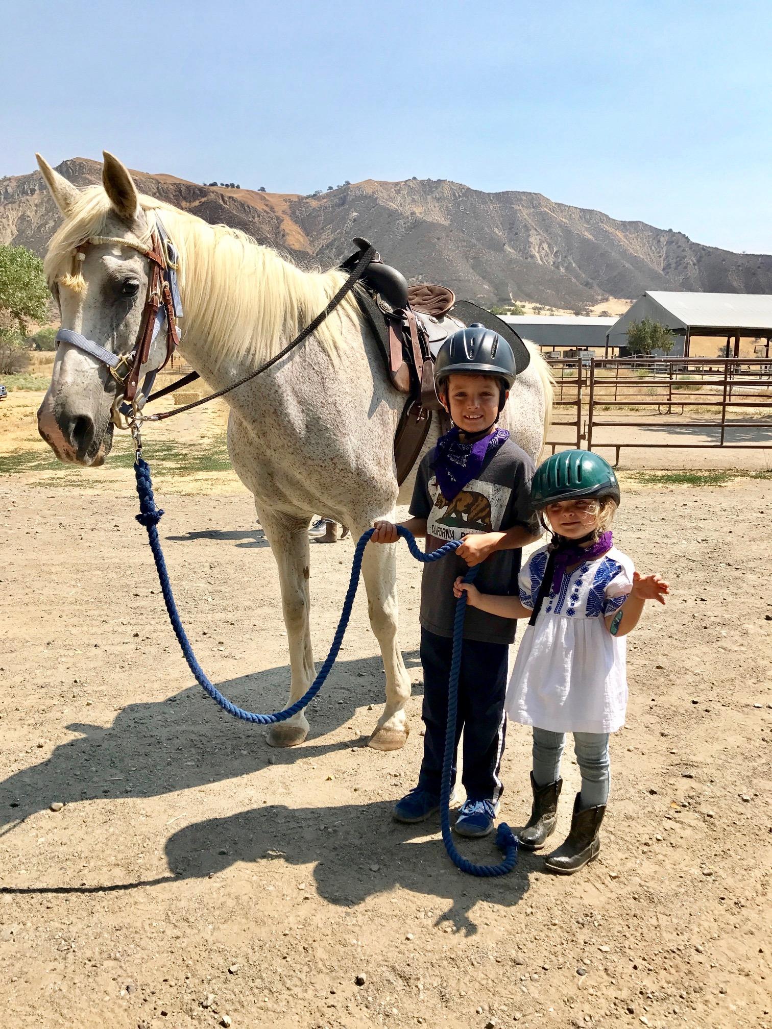Horses & Rescue