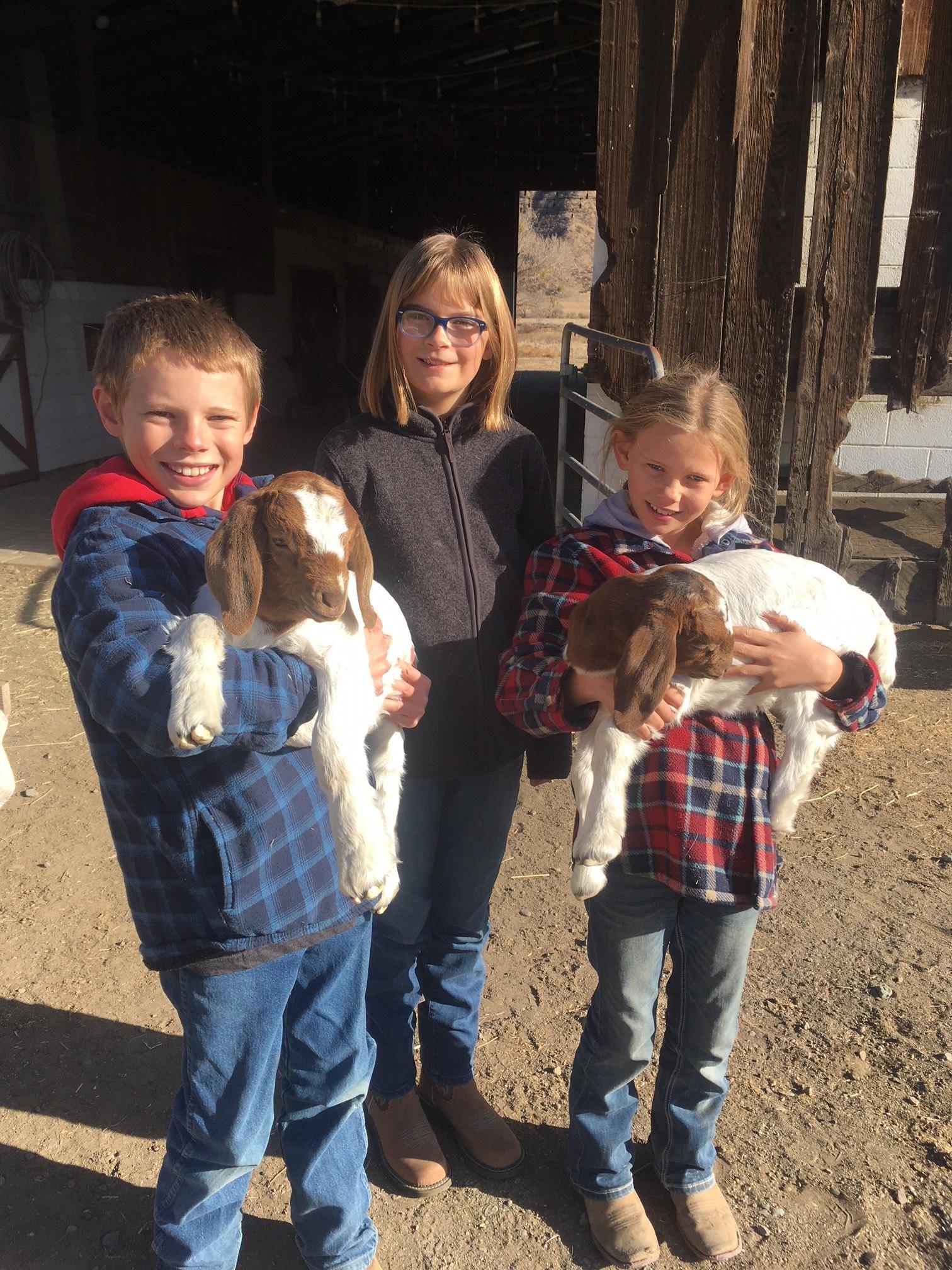 New Goats.jpg