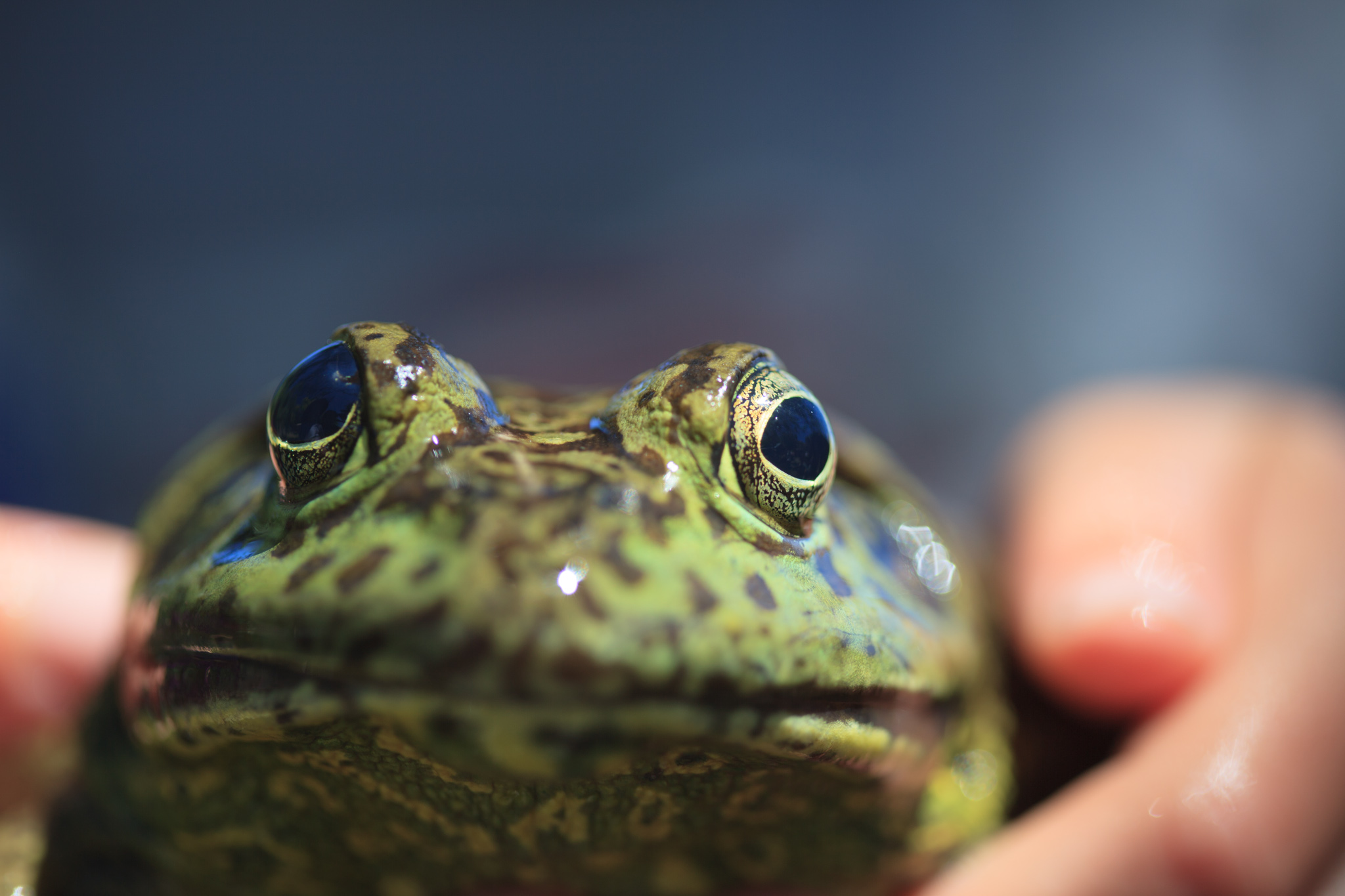 Frogs and Birding