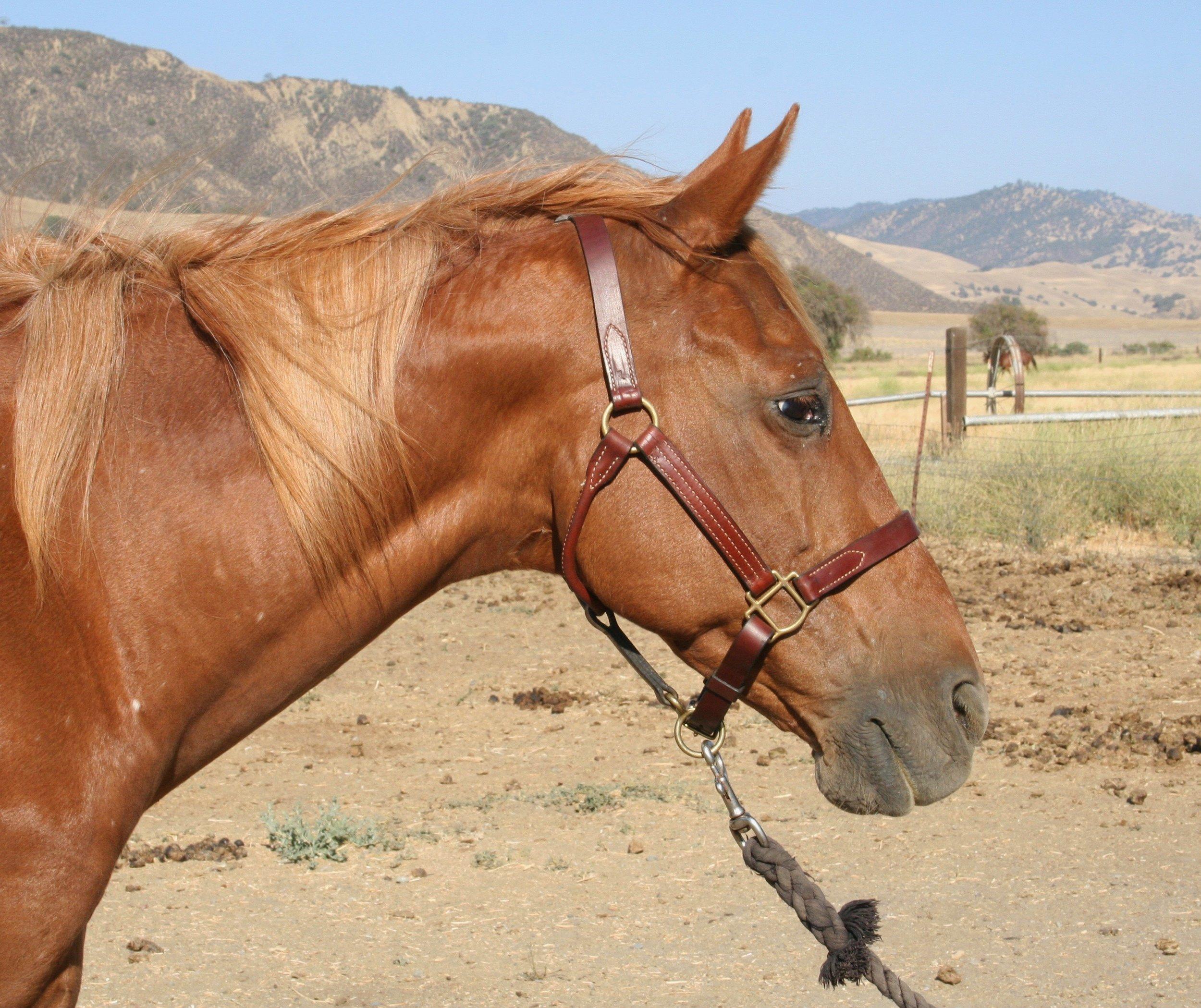 Josie Horse.jpg