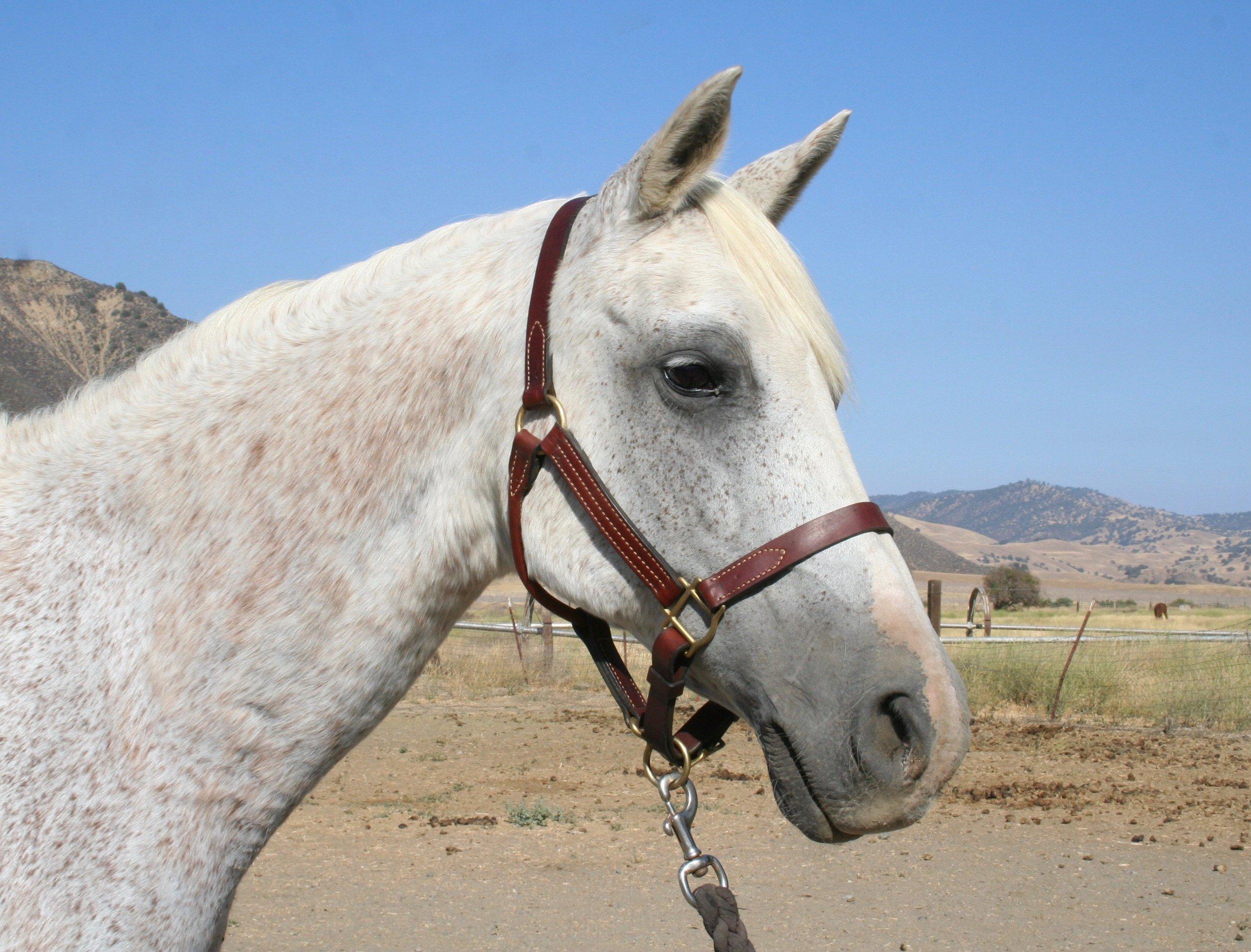 Reign Horse.jpg