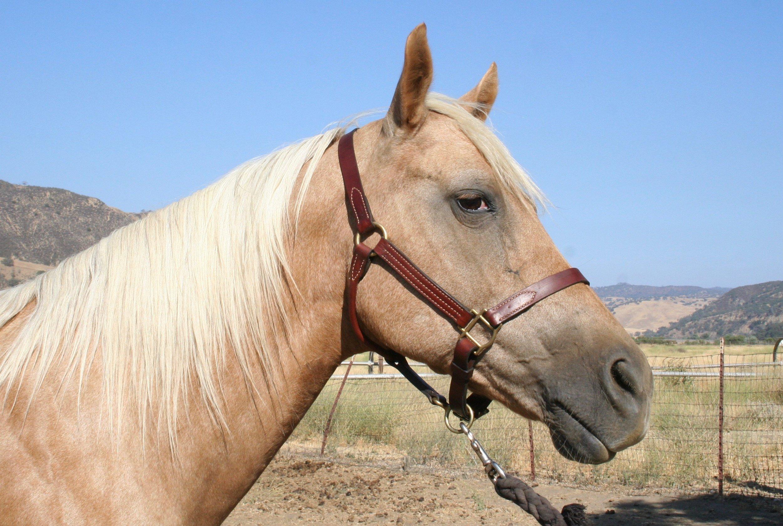Paloma Horse.jpg