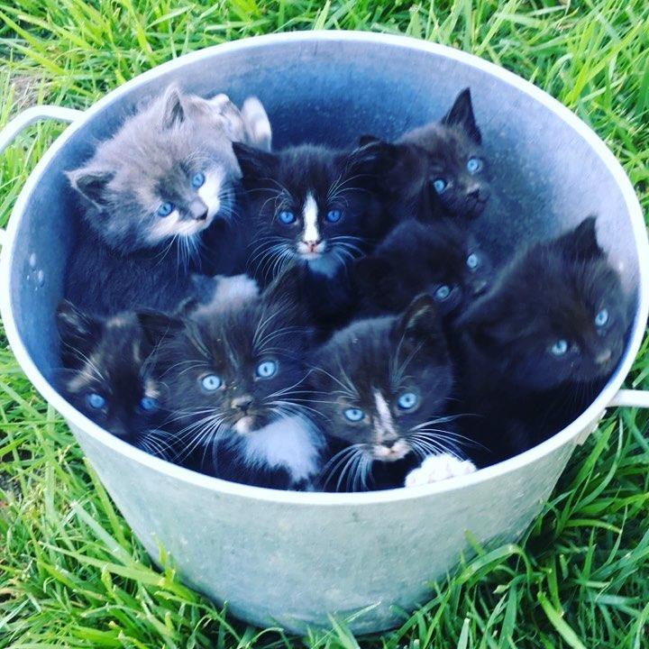 Bucket O Kittens.jpg