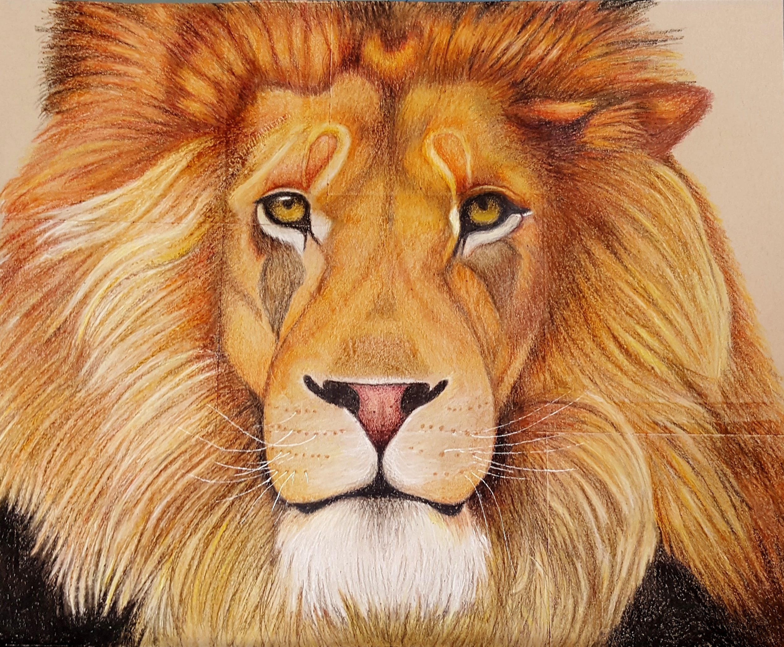 male lion art by Ashley Armstrong