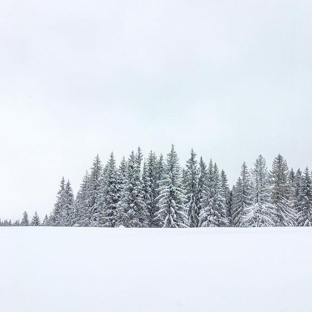 Snowy scenes from a day spent exploring Zakopane ❄️ . . . #poland #flashesofdelight #abmtravelbug #aandktakeeurope #explore #travel #passionpassport #goopgo #europe #winter #snow