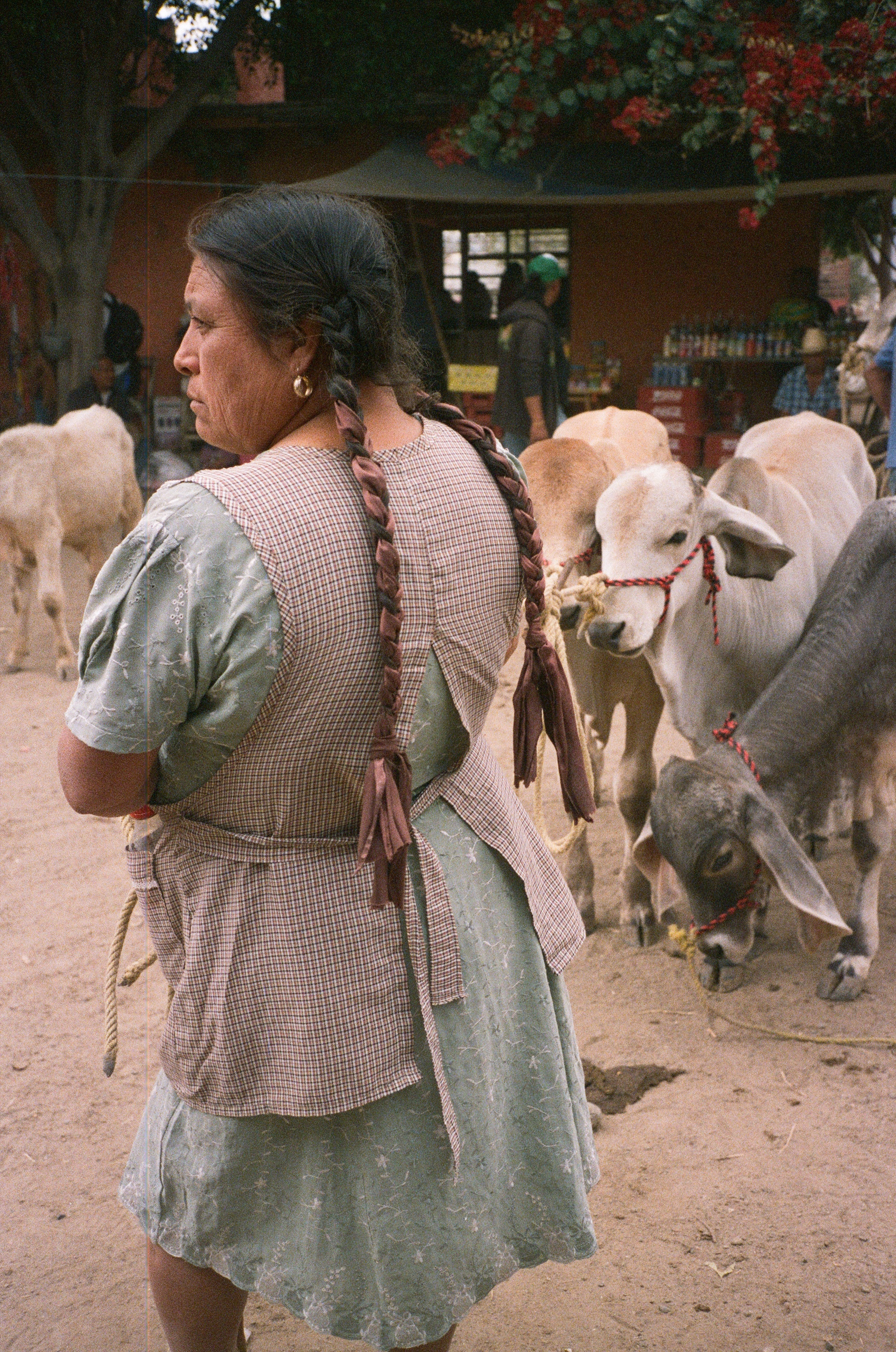 Animal Market outside Ocotlan