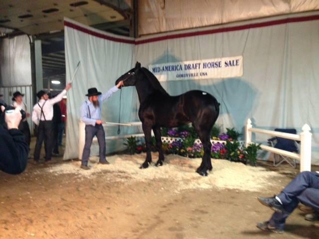 Draft Horse .jpg