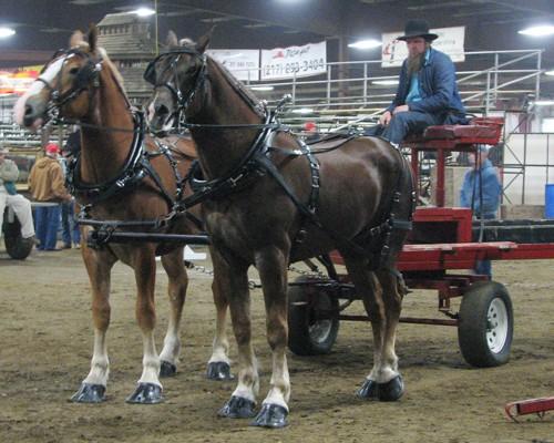 draft horse 2.jpg