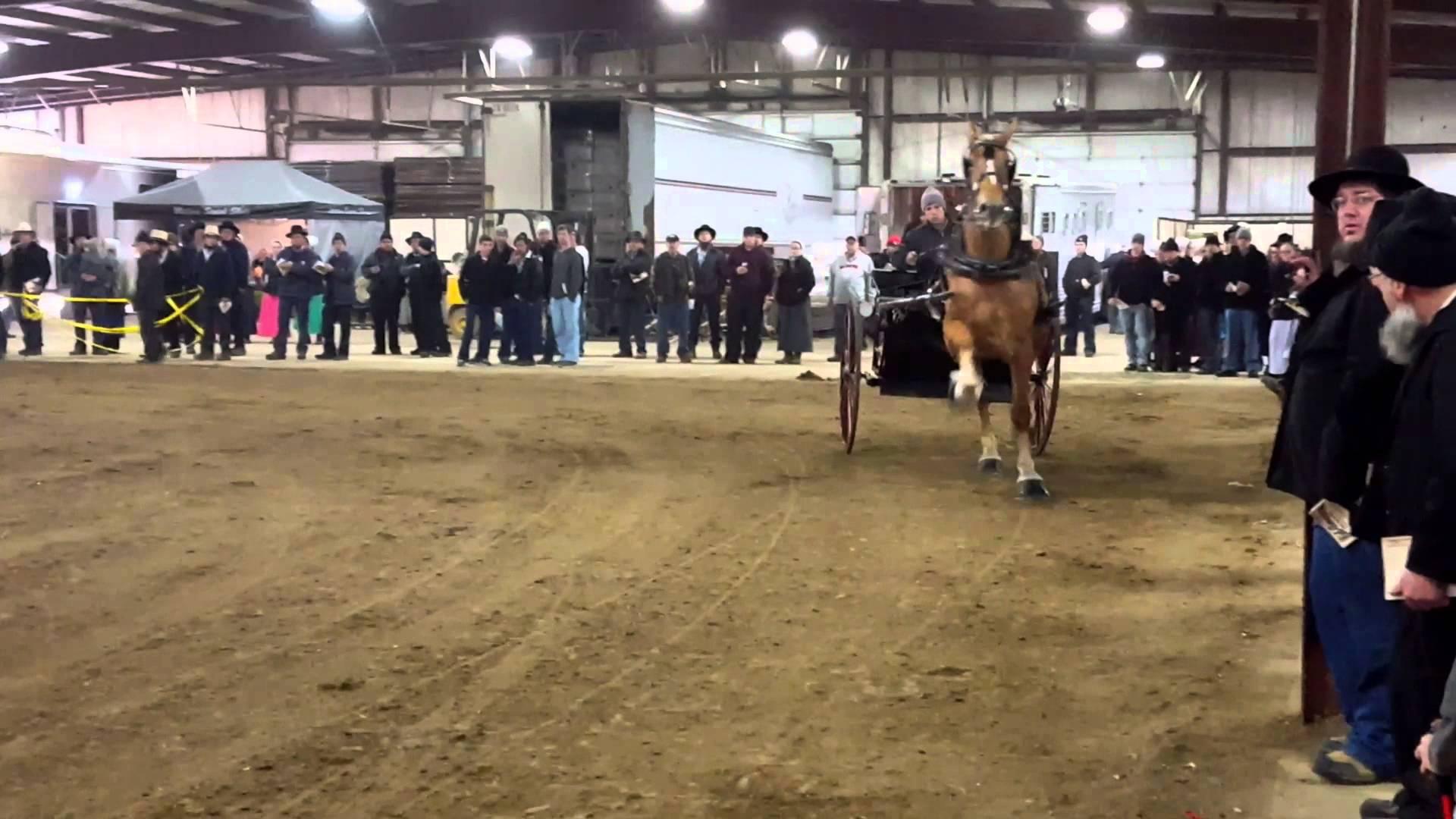 draft horse1.jpg