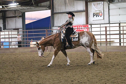 horse 2.jpg