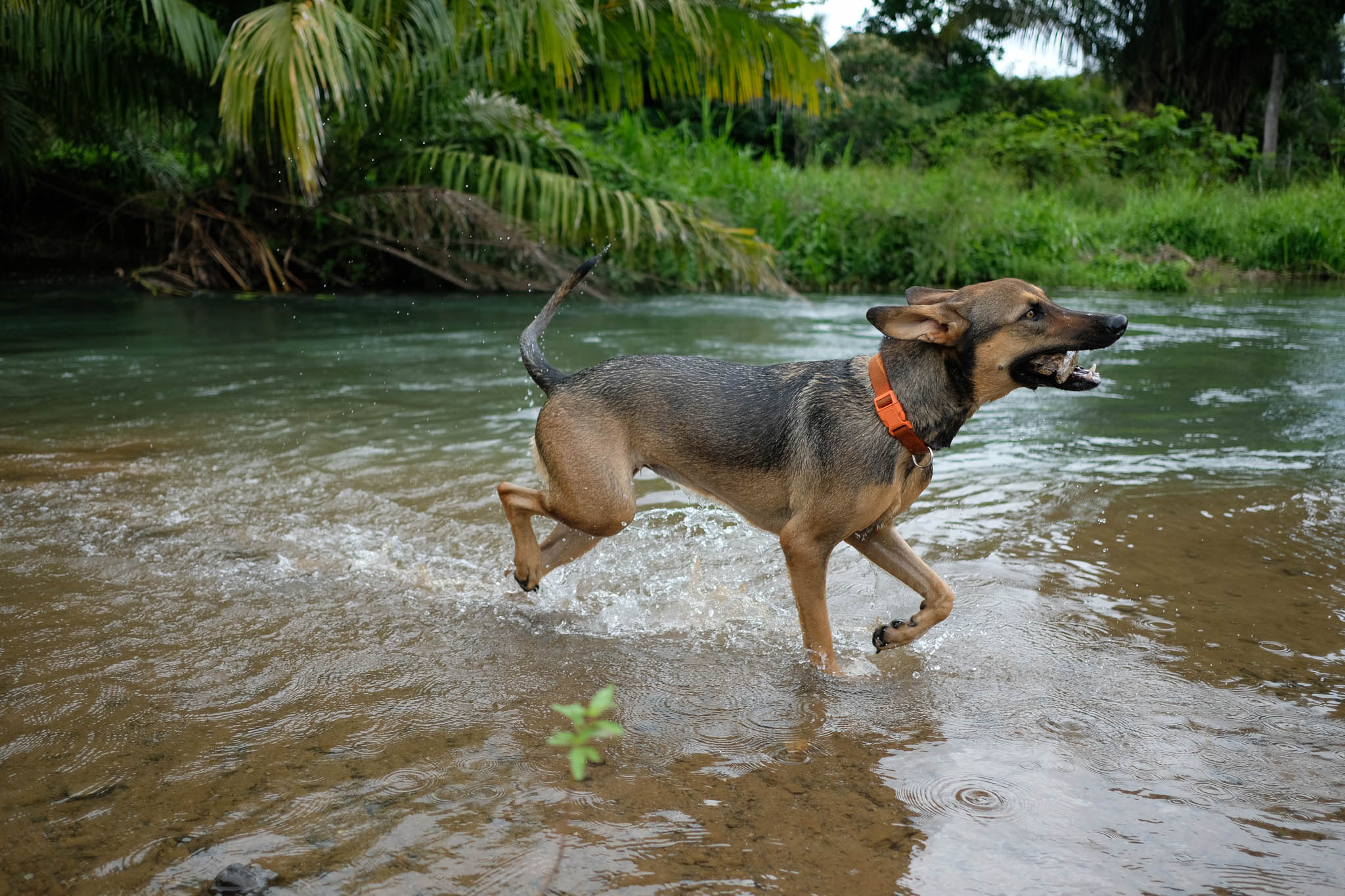 Charlie playing in a river