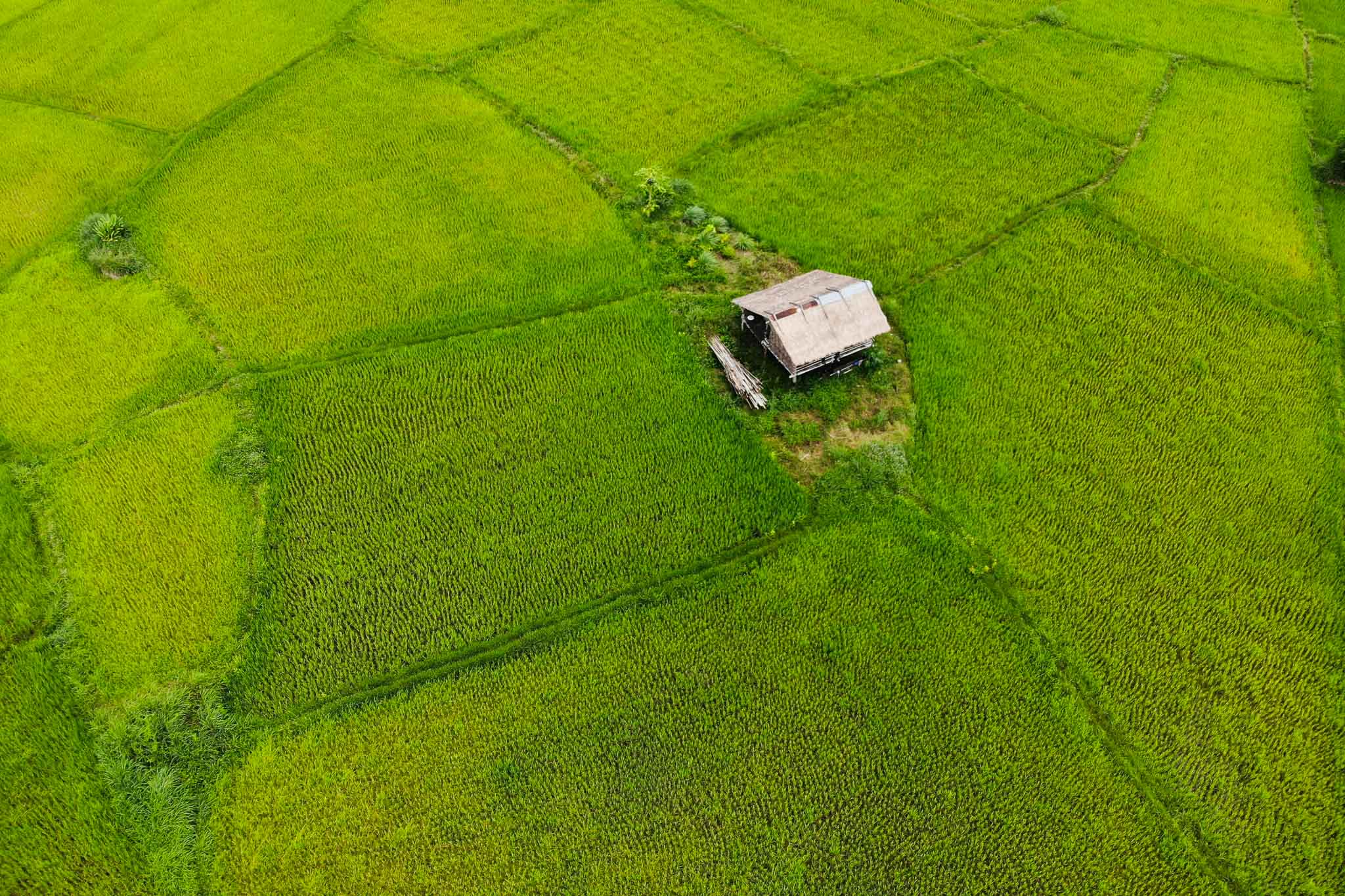 House in a paddy field, Laos