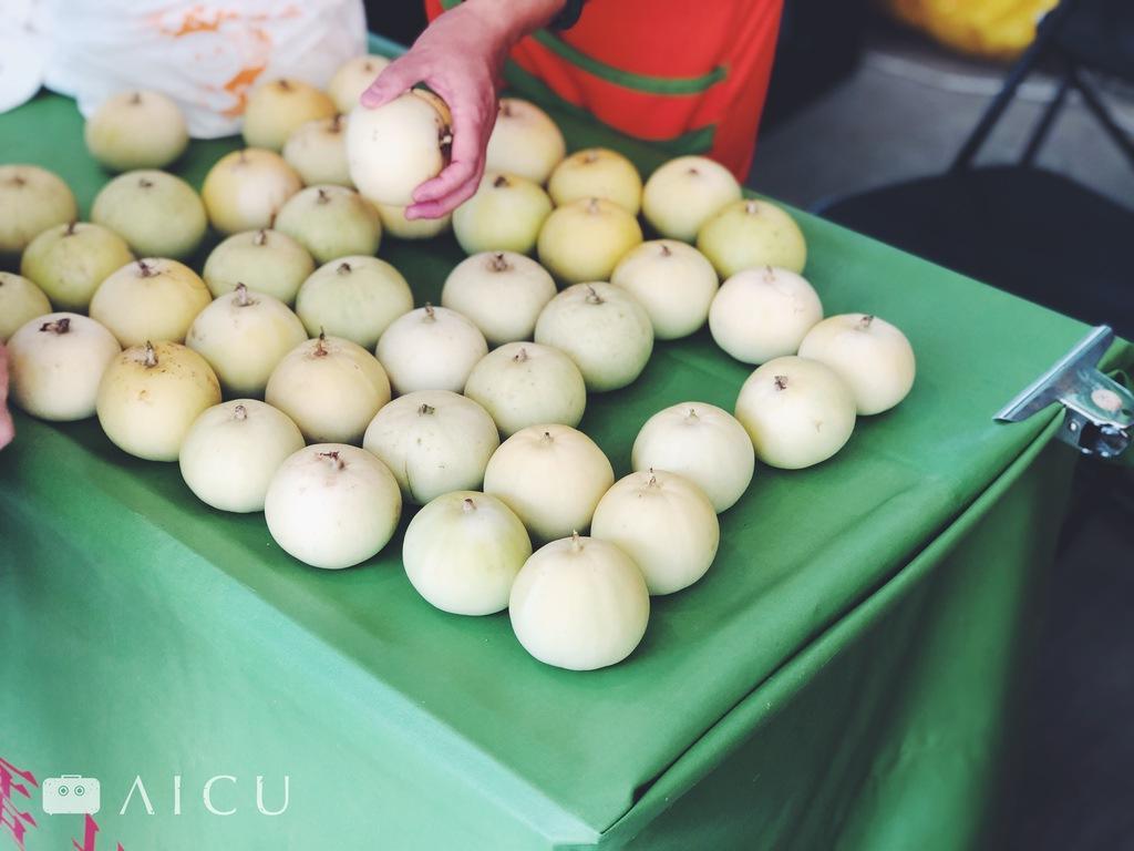 這季節美濃瓜(吊瓜)俗稱香瓜,正是成熟季節。