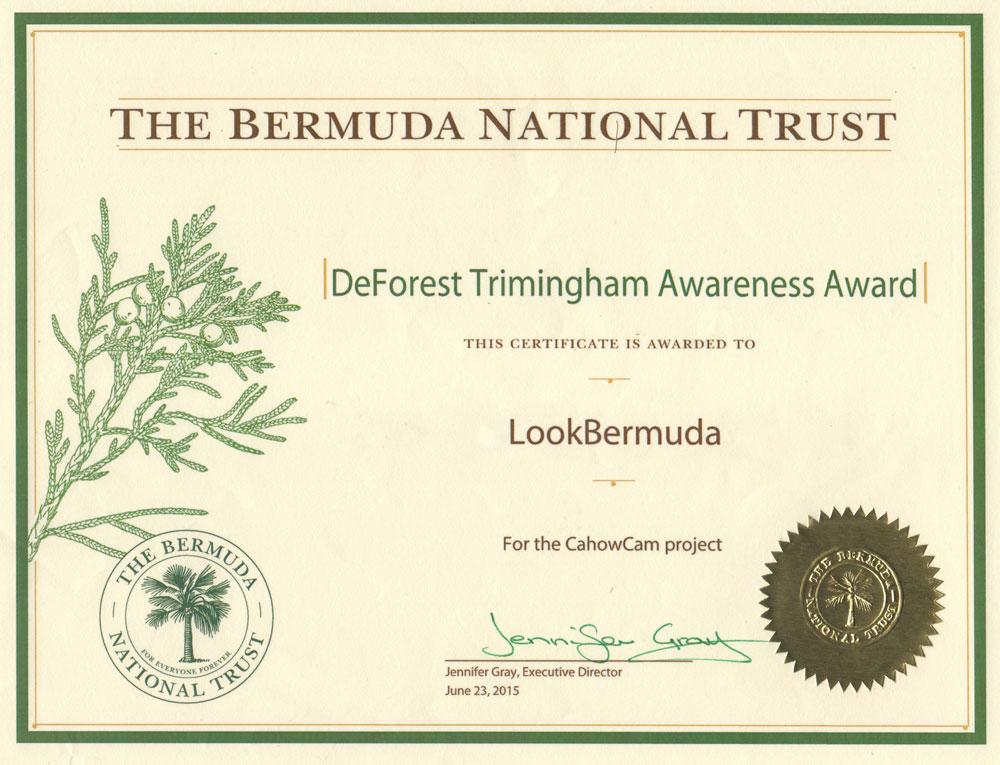 BNT_Award_LookBDA_1k.jpg