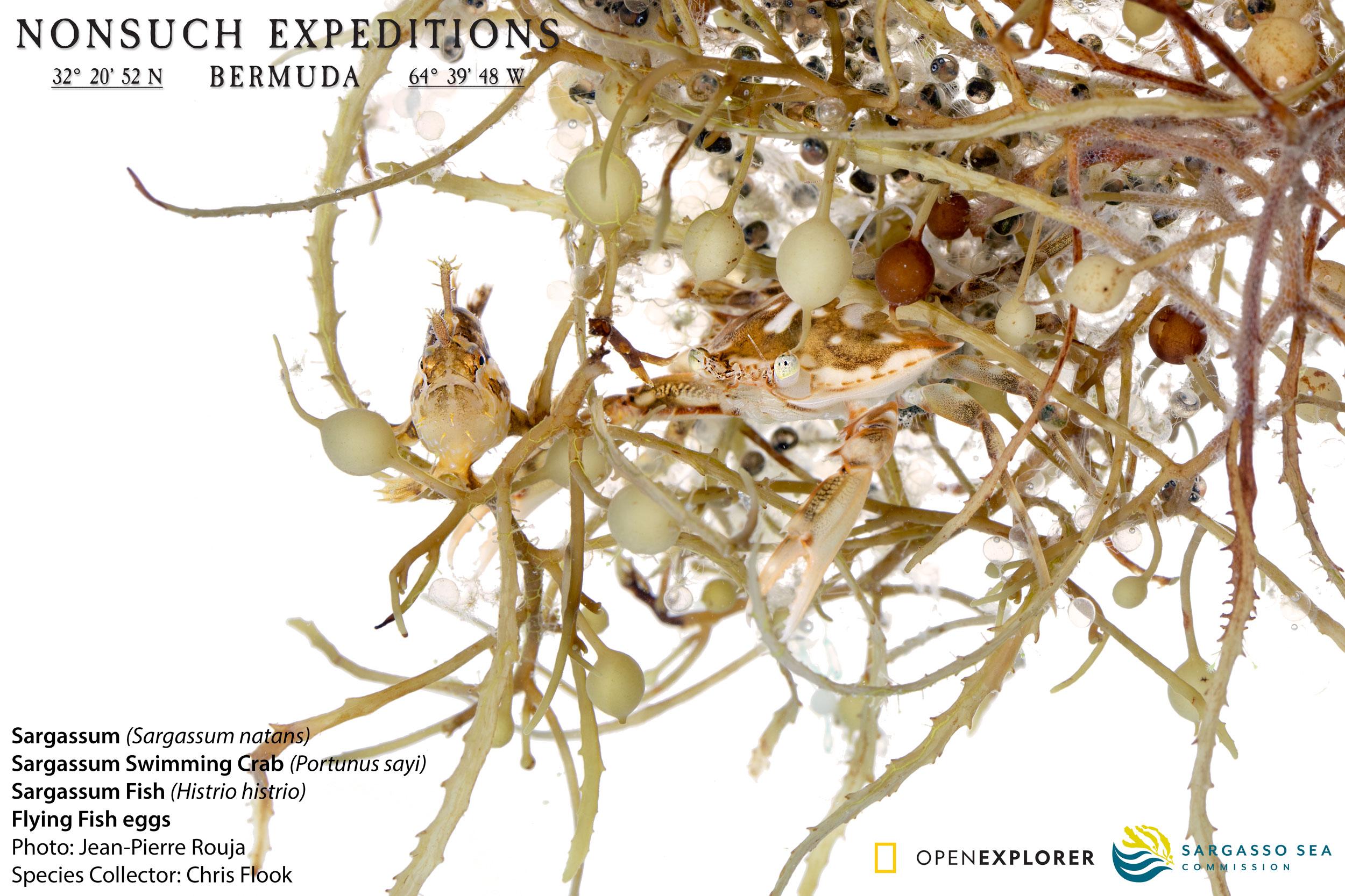 SargassumFish&Crab_G1A4339-crop_FB.jpg