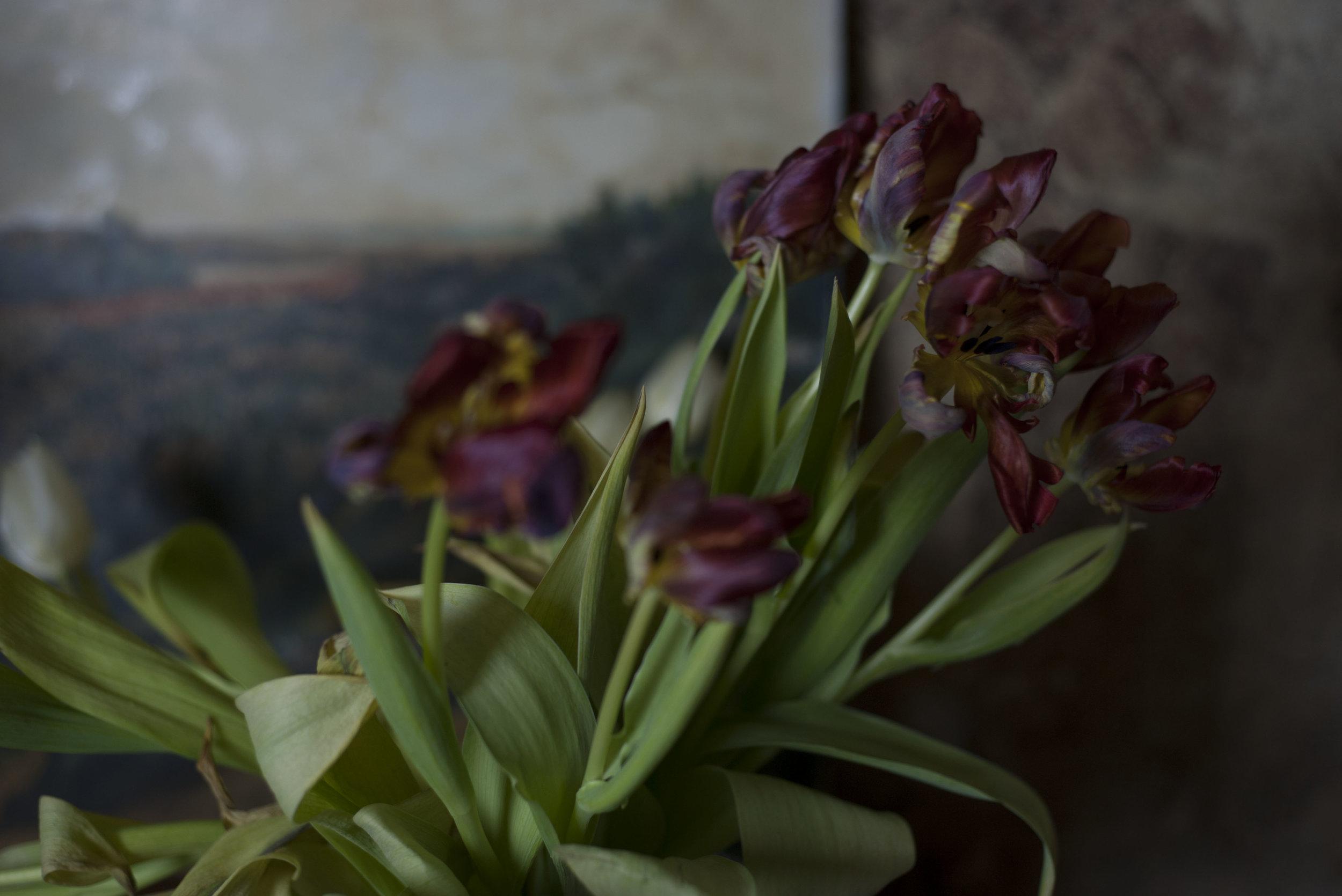 Tulpen_1.JPG