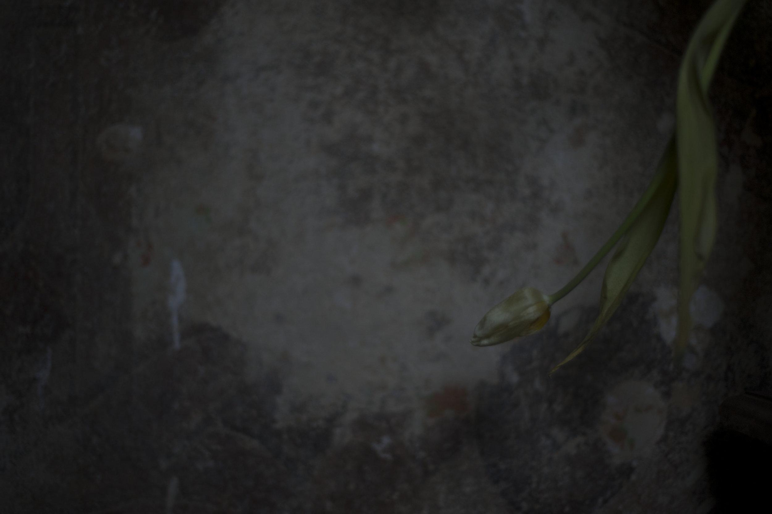 Tulpen_20.JPG