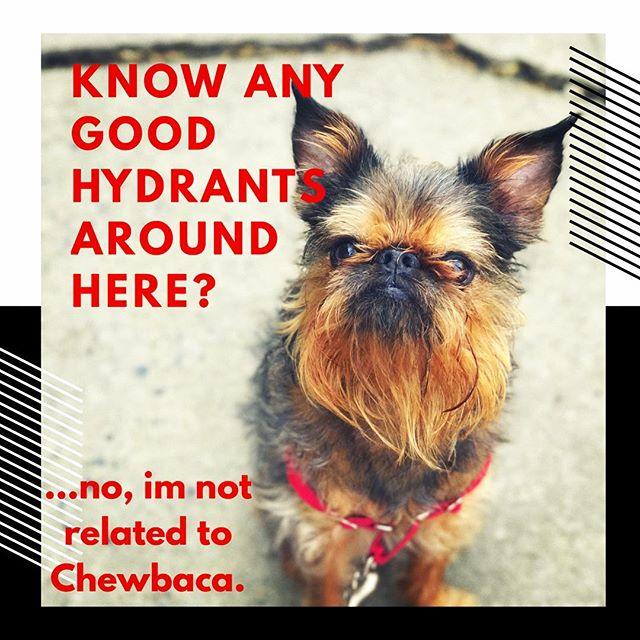 "Another seasoned CityDog ""Strutter"", Monty, never a dull day with this little guy! We ❤️you Monty!. . . . . . #dogpeople #Brooklyndogwalker #brooklyndogwalking #parkslopedogwalker #brooklyndog #dogbehaviour #citydogstrut #treatmydog #parkslopeparents #nycmom #nycparents  #brooklynrescuedogs #prospect_park #dogloversofinstagram #walkyourdog  #brooklyndogtraining #brooklynmom #newyorkmom #newyorkdog #dogsofnewyork #barkpost #brussels griffon"