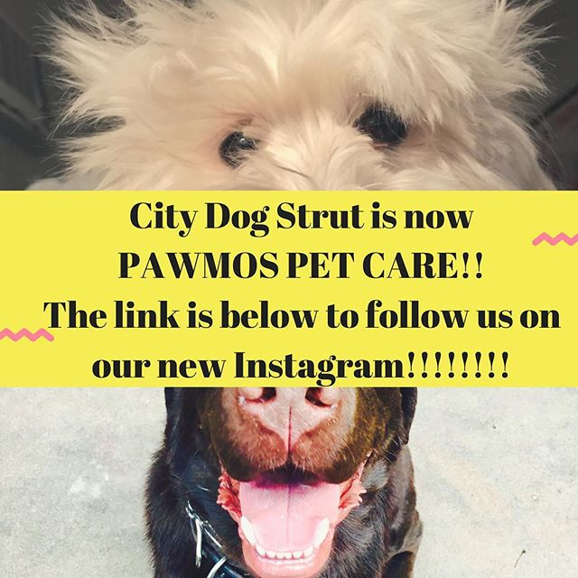We are so excited for you to see our new Instagram! Just click on this - @pawmos_petcare See you there!!🕺🏼💃🏼🐶🎉🐾