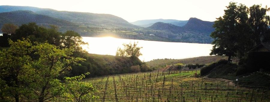bc-wine-region.jpg