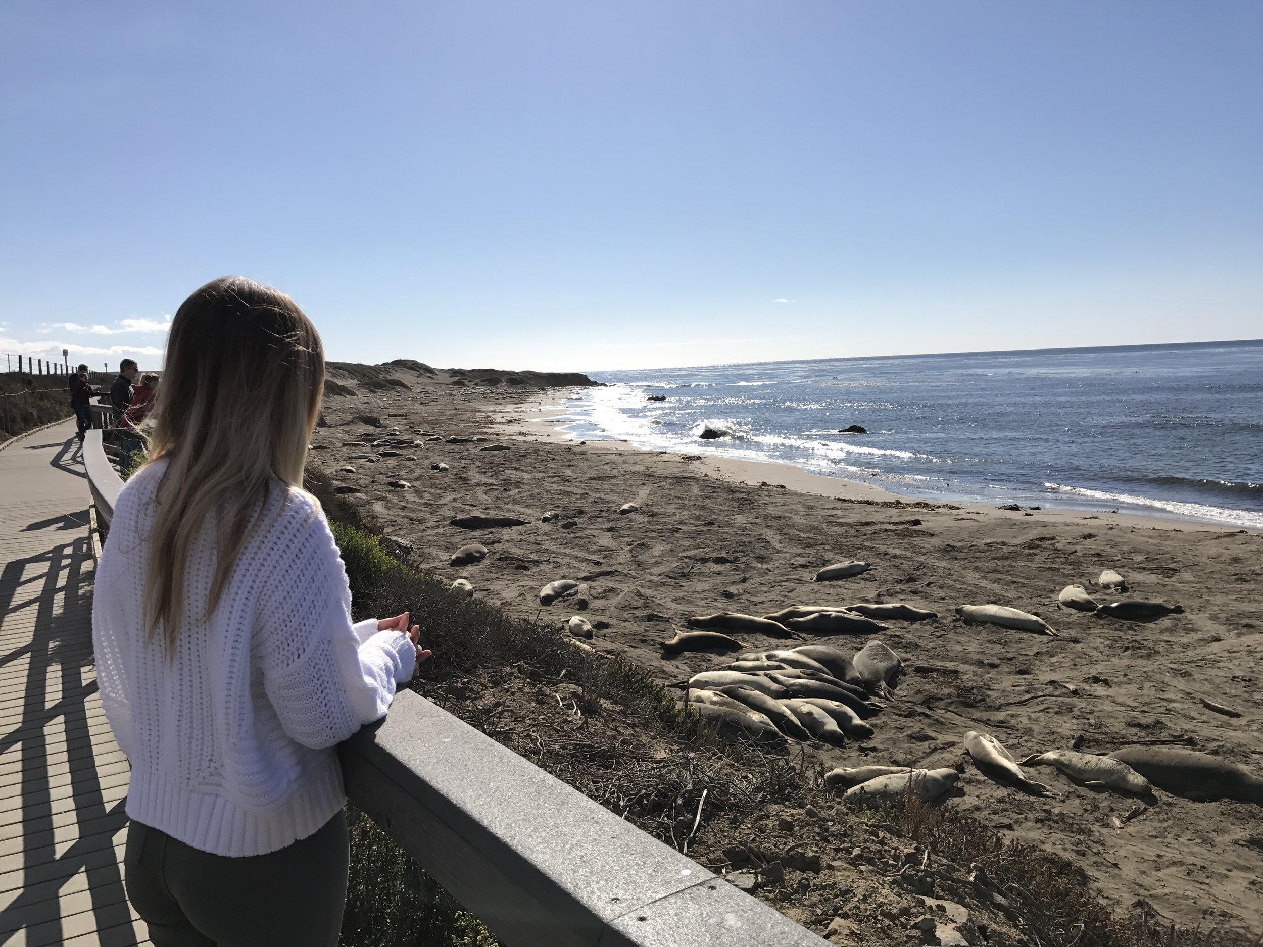 elephant seals 40 hours of freedom vanlife