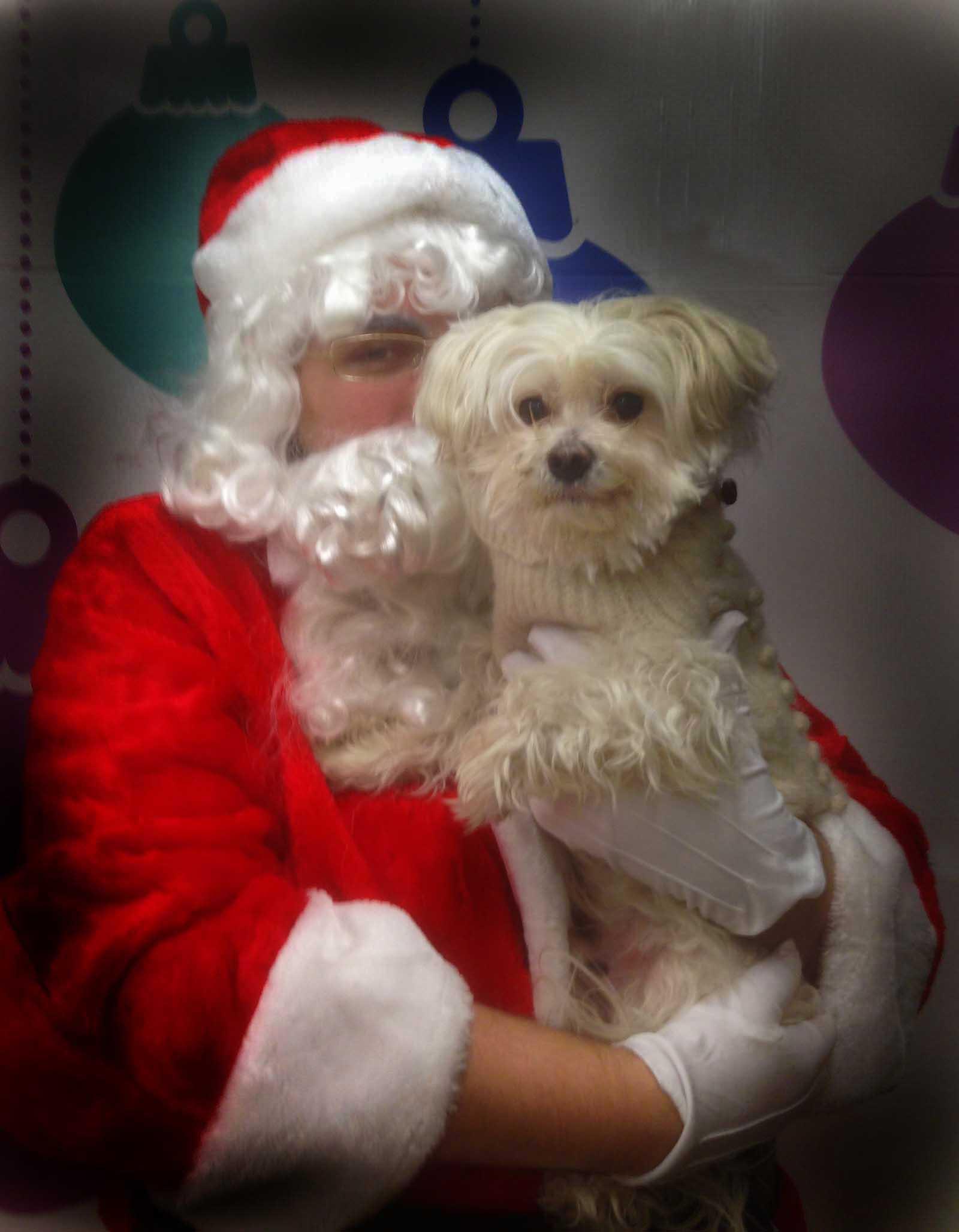 Bingo and Santa 2013