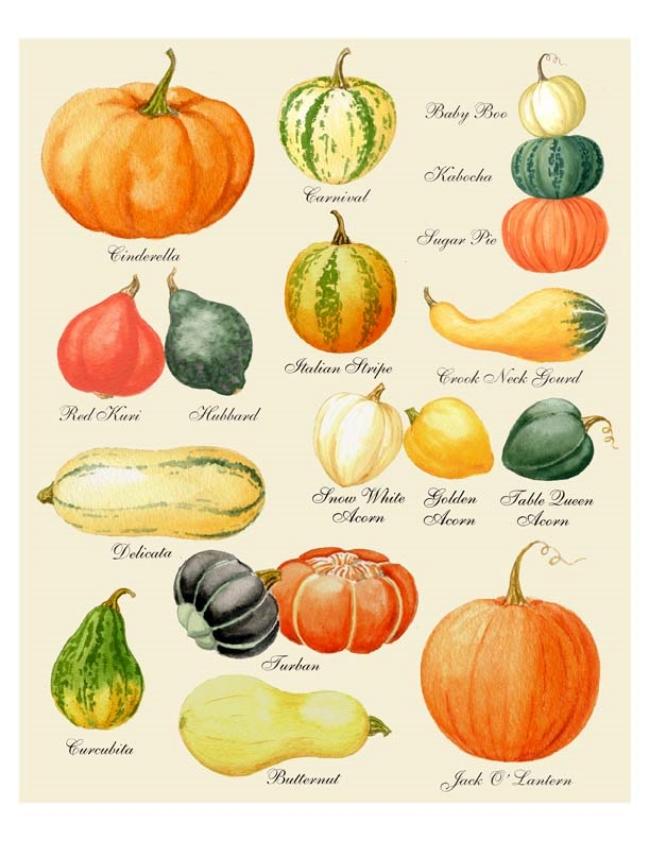 Pumpkin-Chart