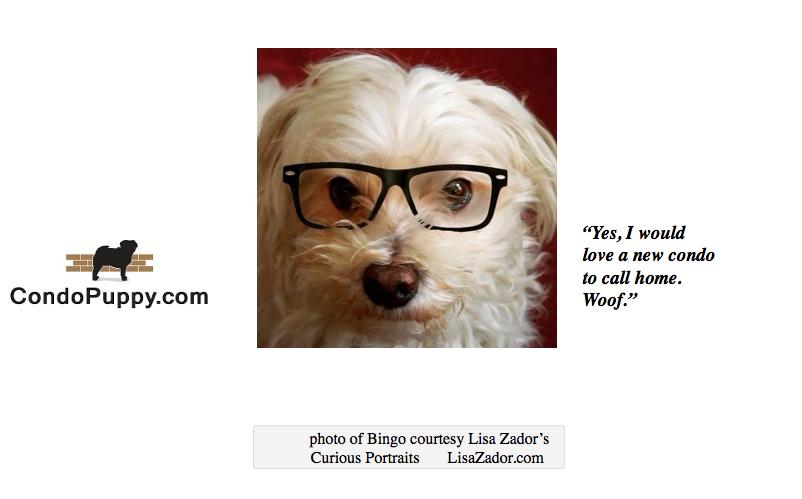 Bingo Zador-represents Condo Puppy
