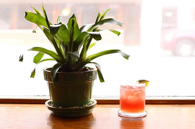 Come sit next to our resident bromeliad and pretend we're not about to be covered in 3-13 inches of snow! Winter In The Tropics is Kettle One vodka, pomegranate, pineapple, lime all shaken up and topped with ginger beer. 🏝 ☃️
