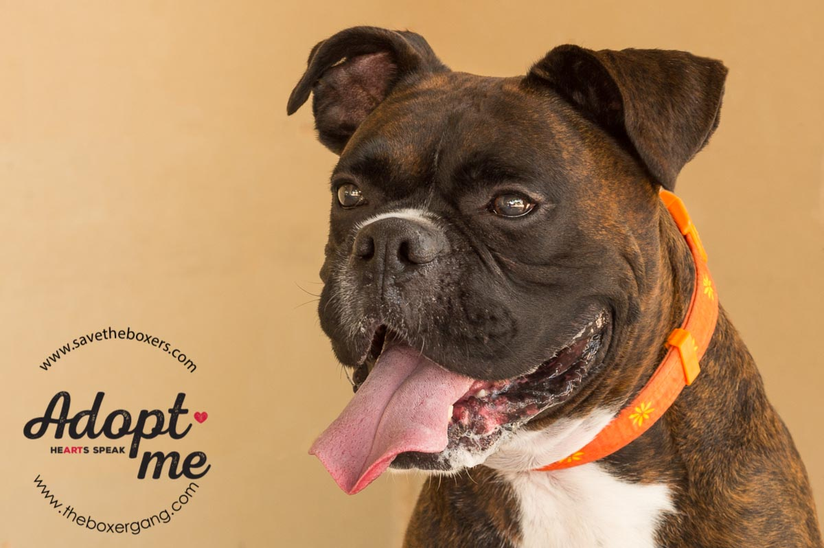 LBR Foster Baron Adopted-2.jpg