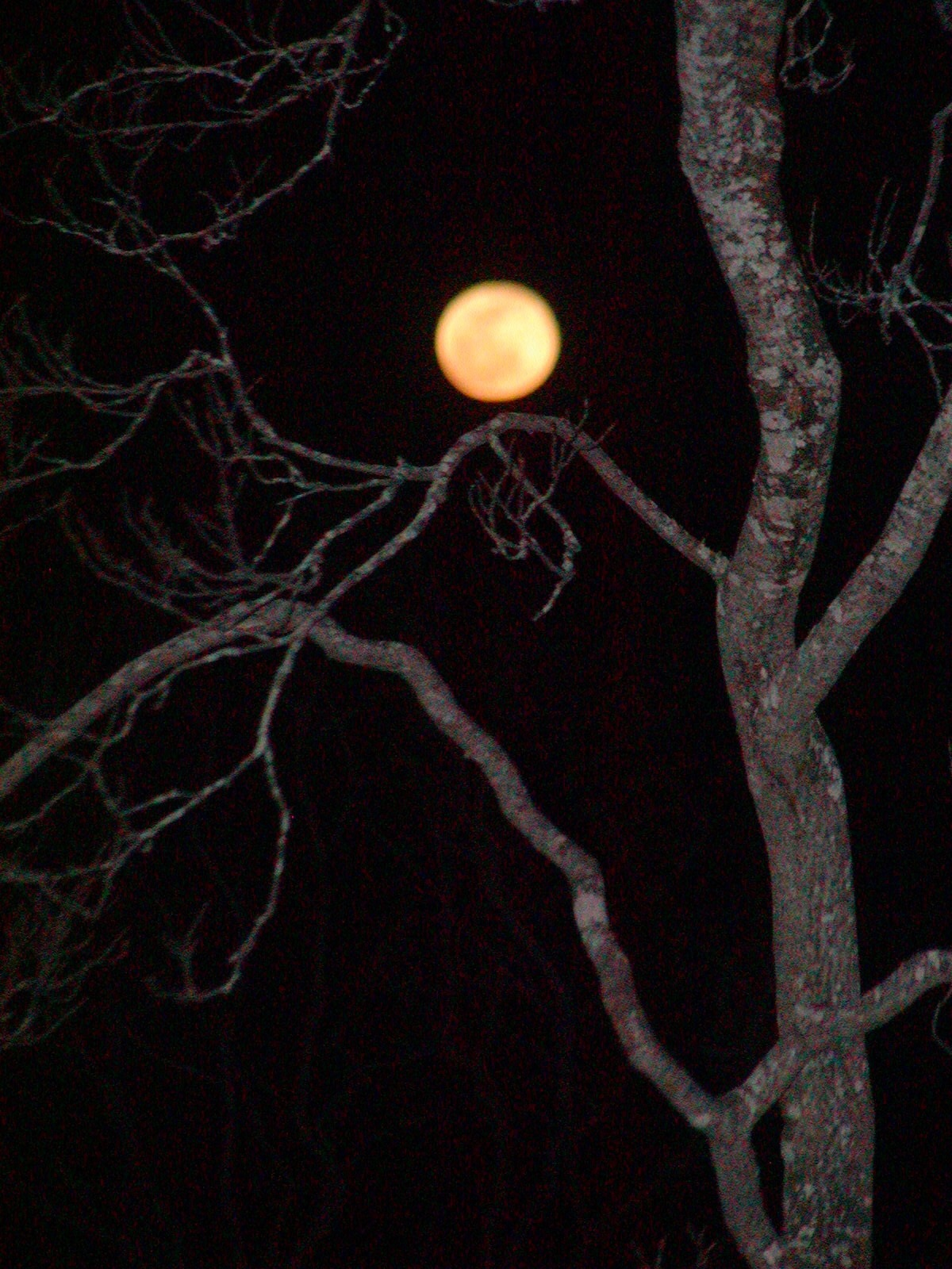 April 4, 2015: Full Awakening Moon as seen from yard alongside Mill Tail Swamp Pond, Block Island, RI.