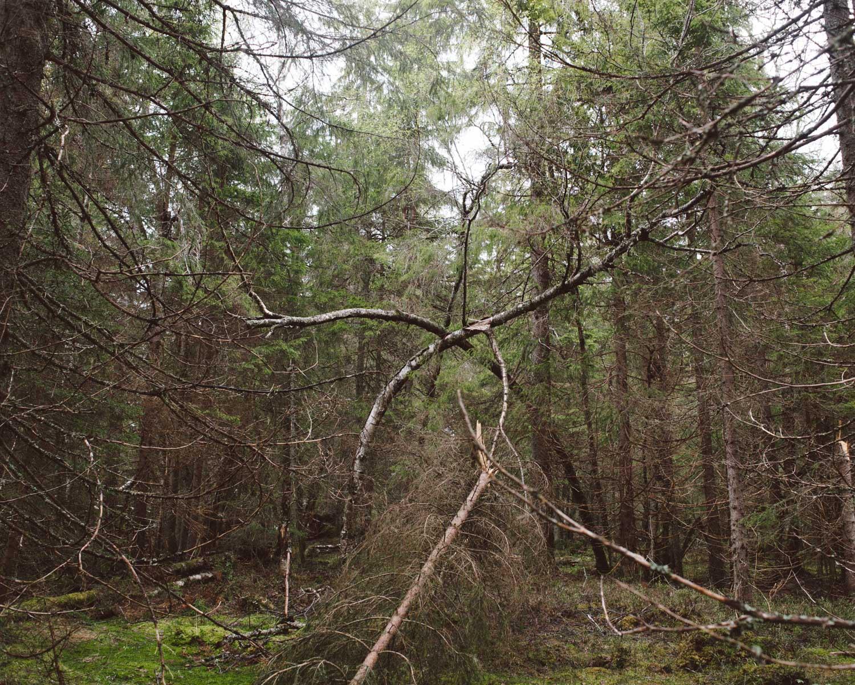 05-Finnskogen-Terje-Abusdal.jpg