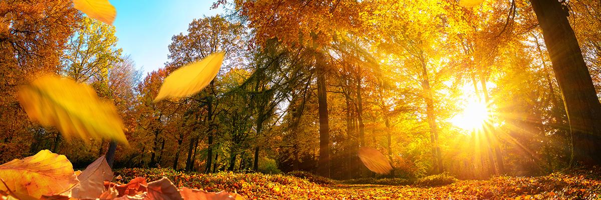 ZW-Beitragsbild2-Herbst.jpg