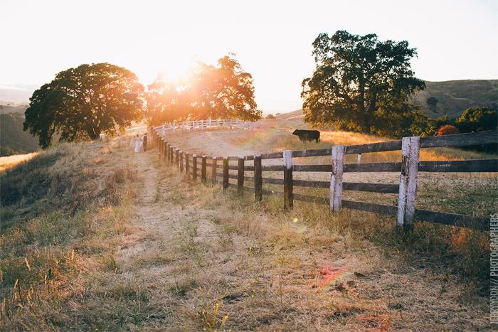 Diablo_Ranch_Walnut_Creek_Wedding-155.JPG