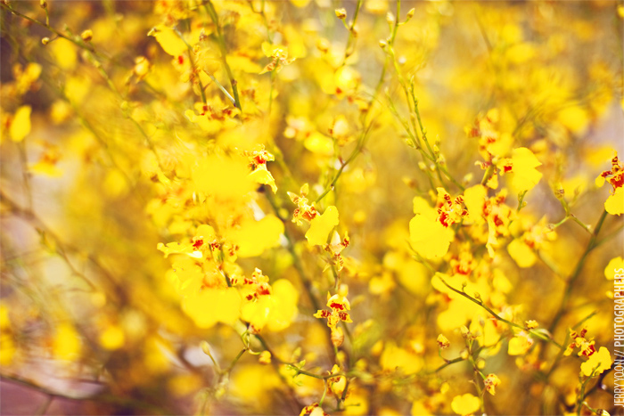 Pasadena_City_Hall_Wedding_Yellow_Gray_Colors-18.JPG