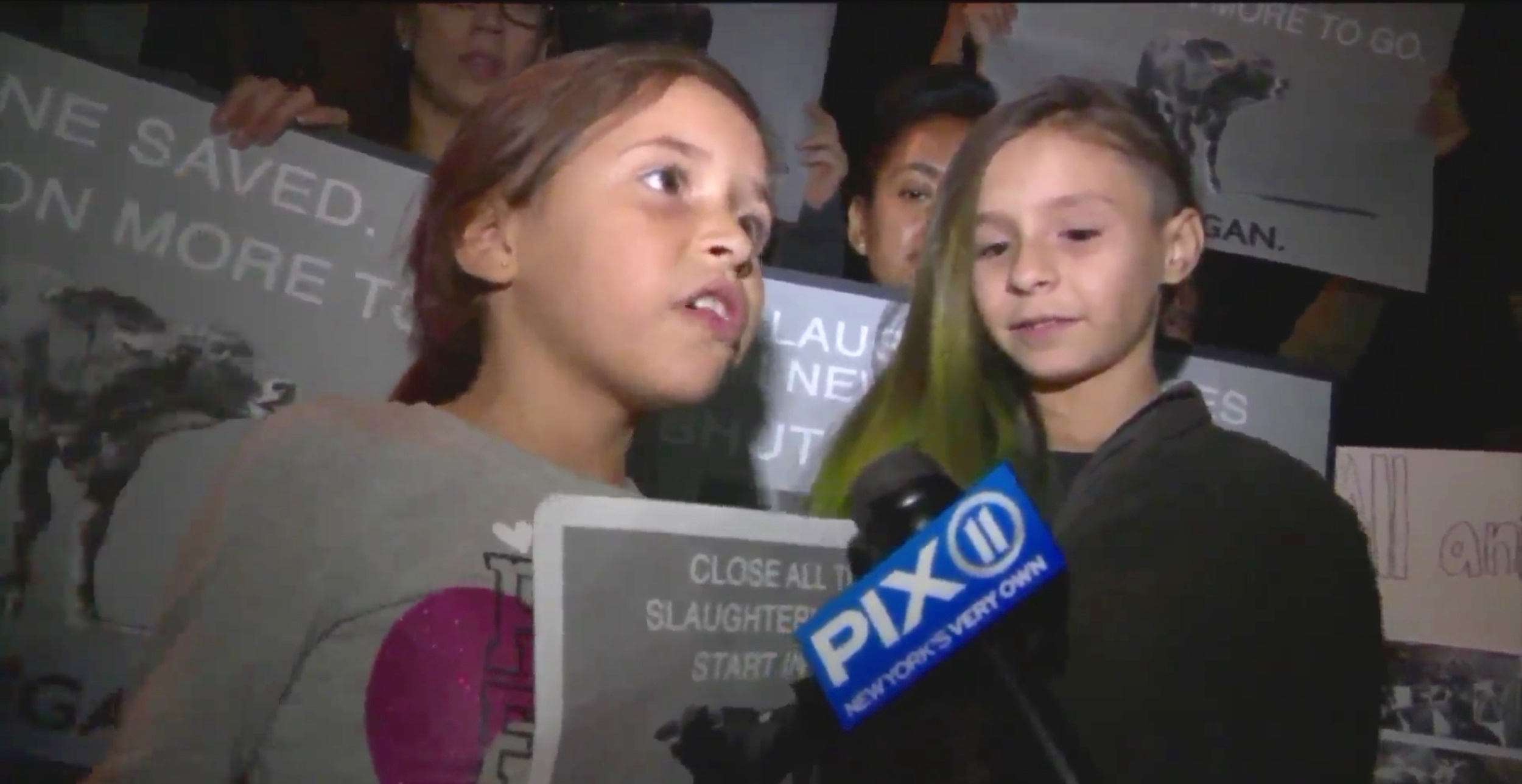 PIX11 (video+print):  Protestors against NYC slaughterhouses gather after steer escapes in Brooklyn