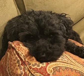 Black's dog, Louie