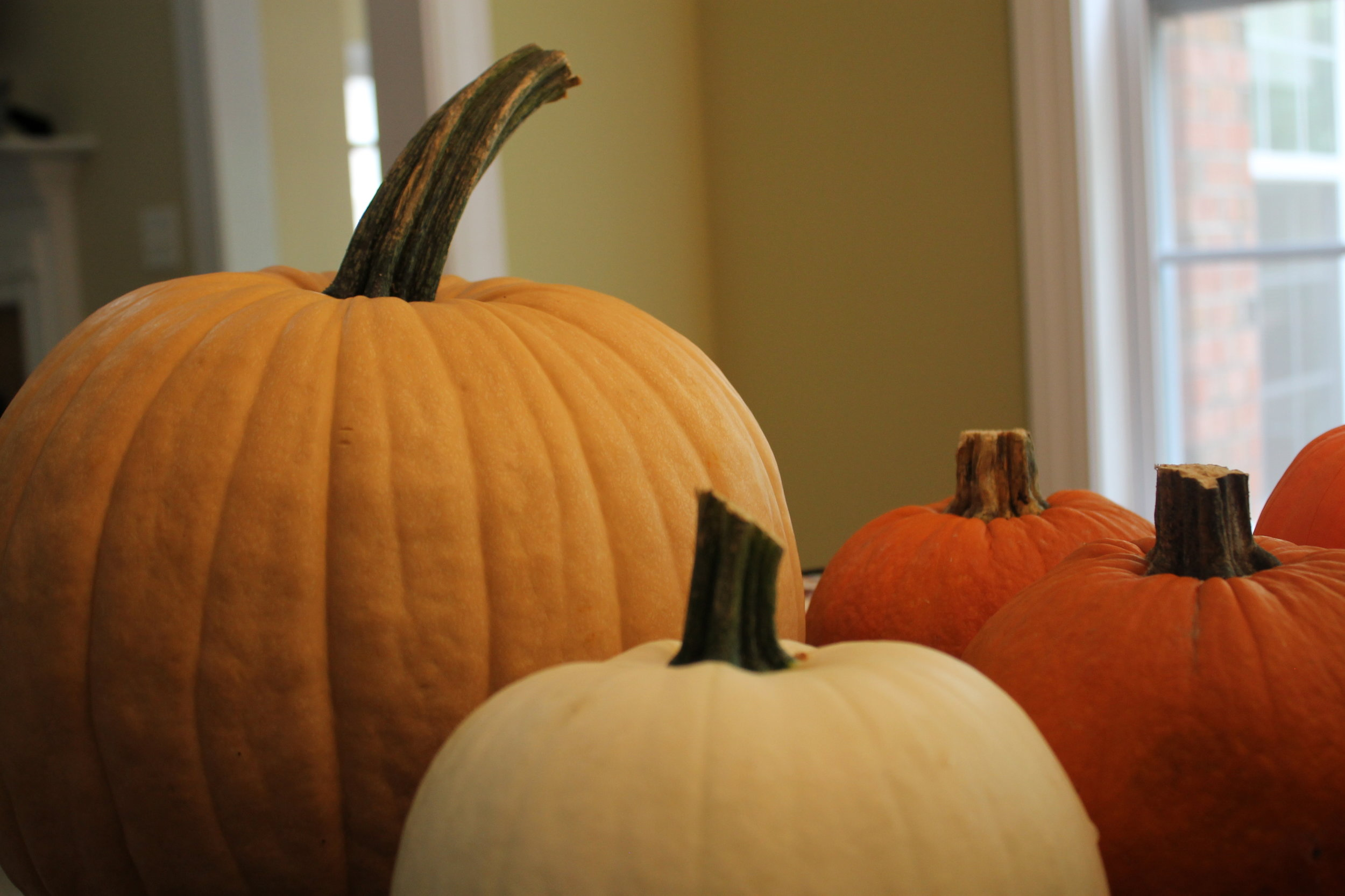 Before you can start decorating you must pick a pumpkin. Some people opt out for a plastic pumpkin but if you're wanting to be a little more traditional, stop by your local pumpkin patch or Walmart to grab that round orange bundle of joy.