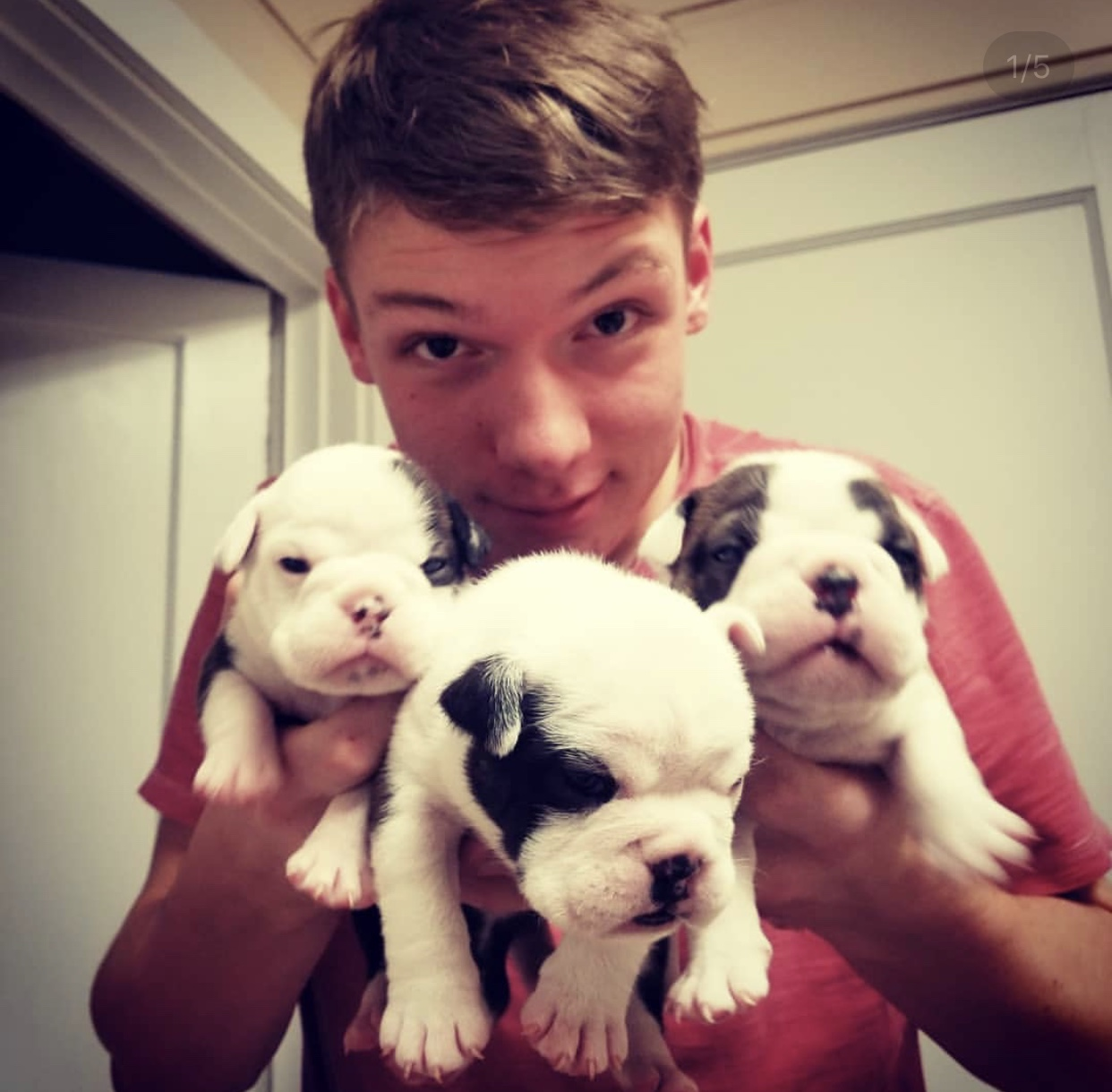 Caleb Allen, high school junior, with three of his brand-new French Bulldog puppies. His dog Angel had puppies less than a month ago, so his hands are full - no pun intended.