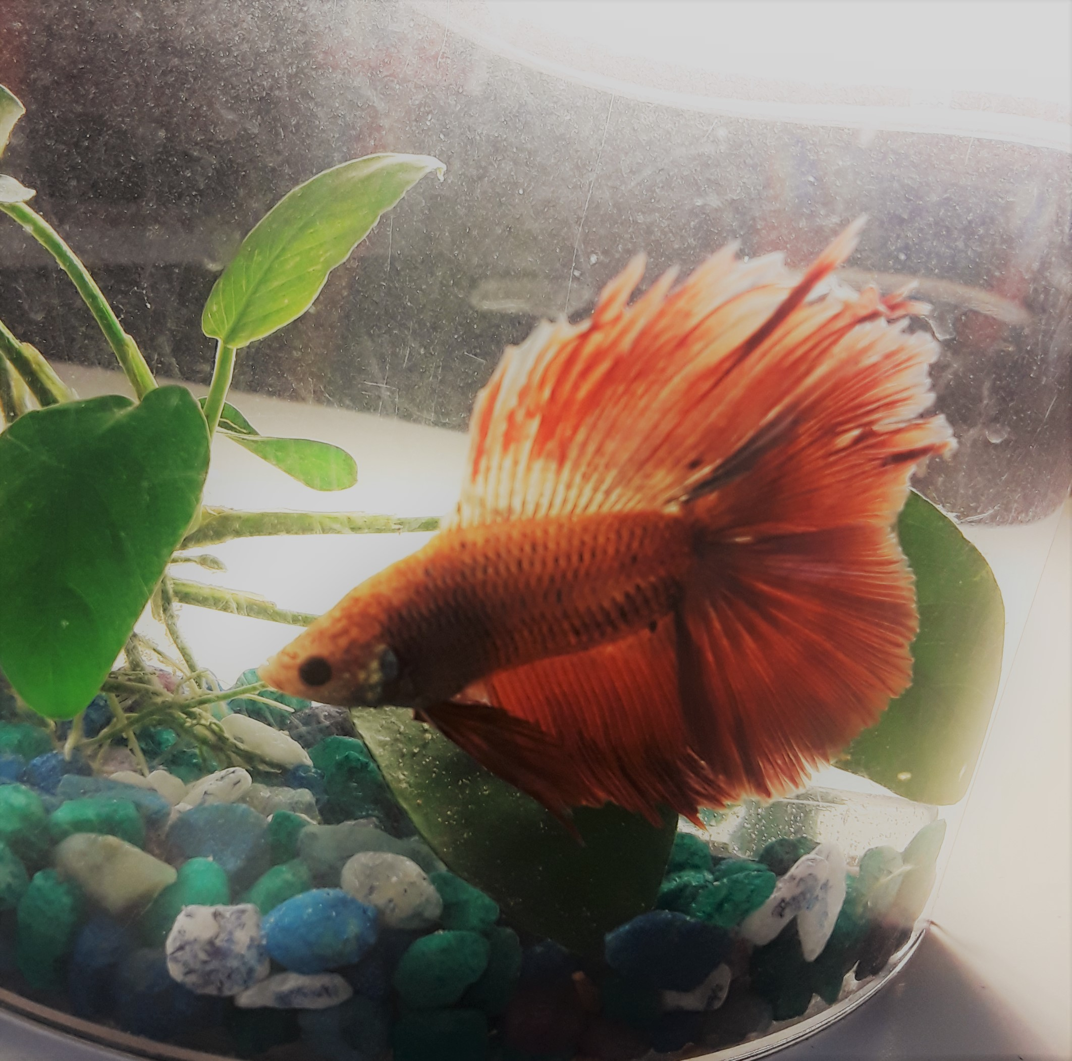NGU students aren't allowed cats or dogs on campus, but they can have fish. This is freshman Chloe Watson's beta fish, Taco.