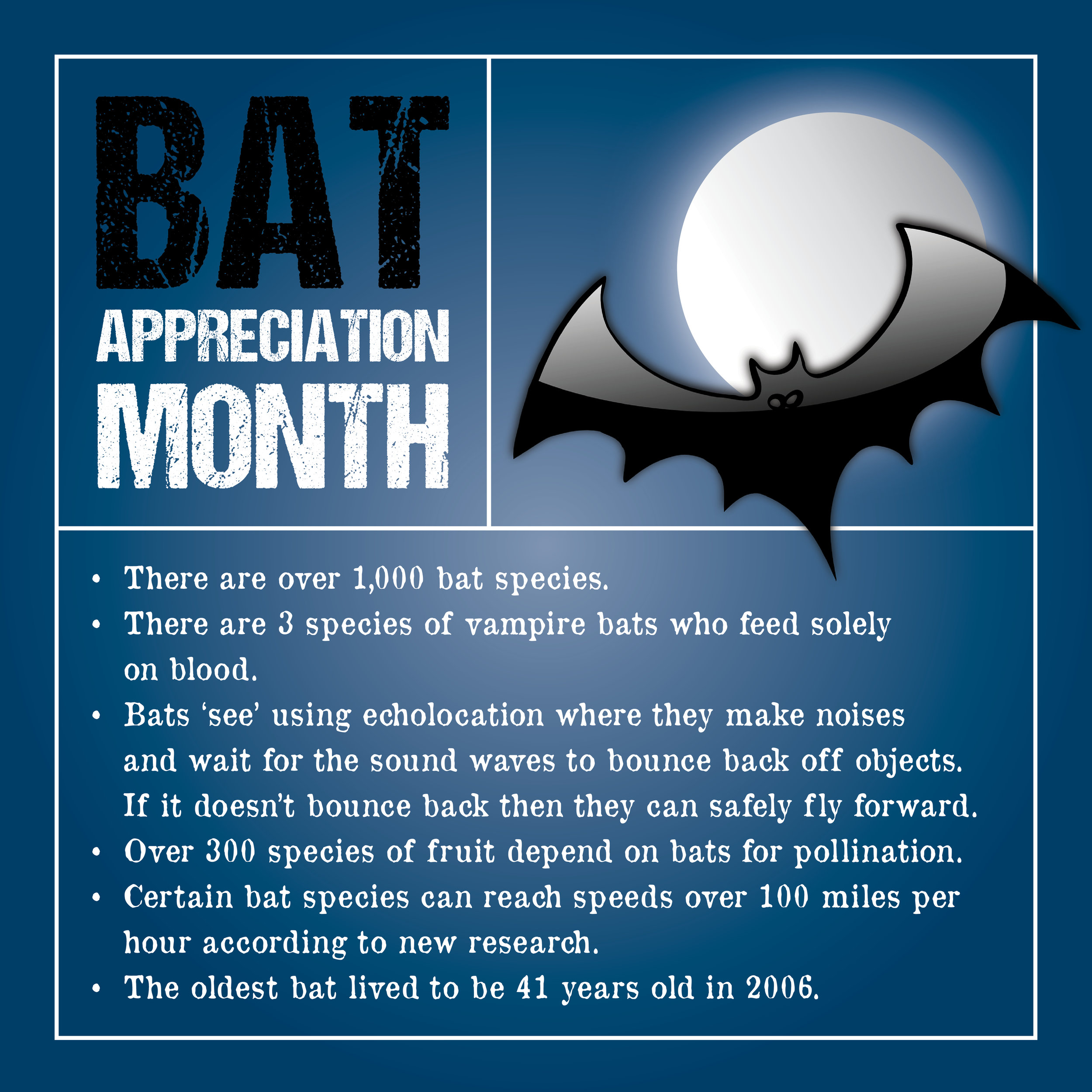 October is Bat Appreciation Month, so here are some fun facts about bats to prepare you for the month. These facts were provided by Science Kids.