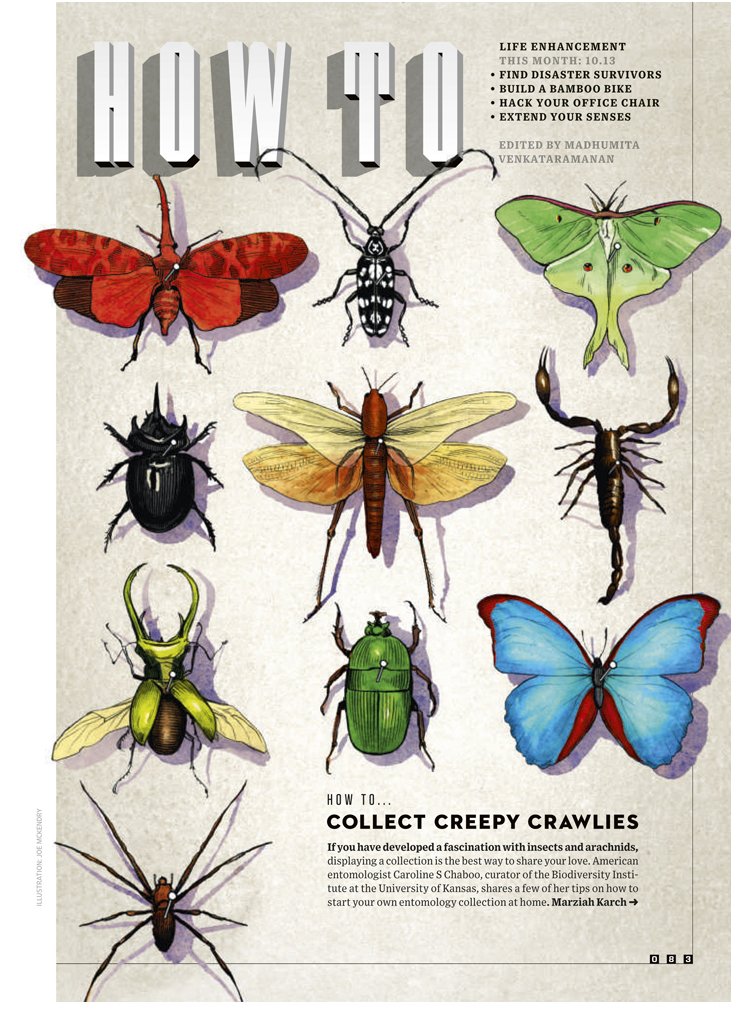 HOW TO COLLECT CREEPY CRAWLIES  WIRED UK