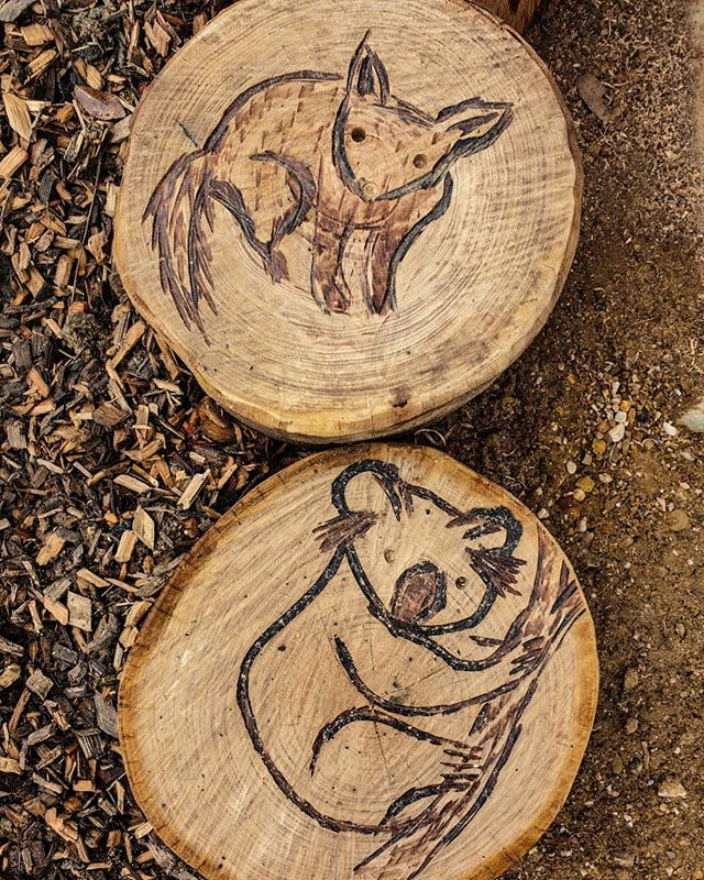 Get around those carvings! We've turned boring old 'stepping stone' log rounds into works of art onsite at #omeokindergarten! 🦘🐨🤩 . . . .  #thinkoutsidethebox #art #landscapedesign #exteriordesign #landscapers_of_instagram #australianlandscapers #landscapeaustralia #gardendesign #lovewhatyoudo #buildinggardens #naturalplayspace #chainsawcarving #sthilgotit #tradie #eastgippsland #gardening #gardens #australiangarden #kindergarten #design #sawart #australia #australiananimals #koala #possum