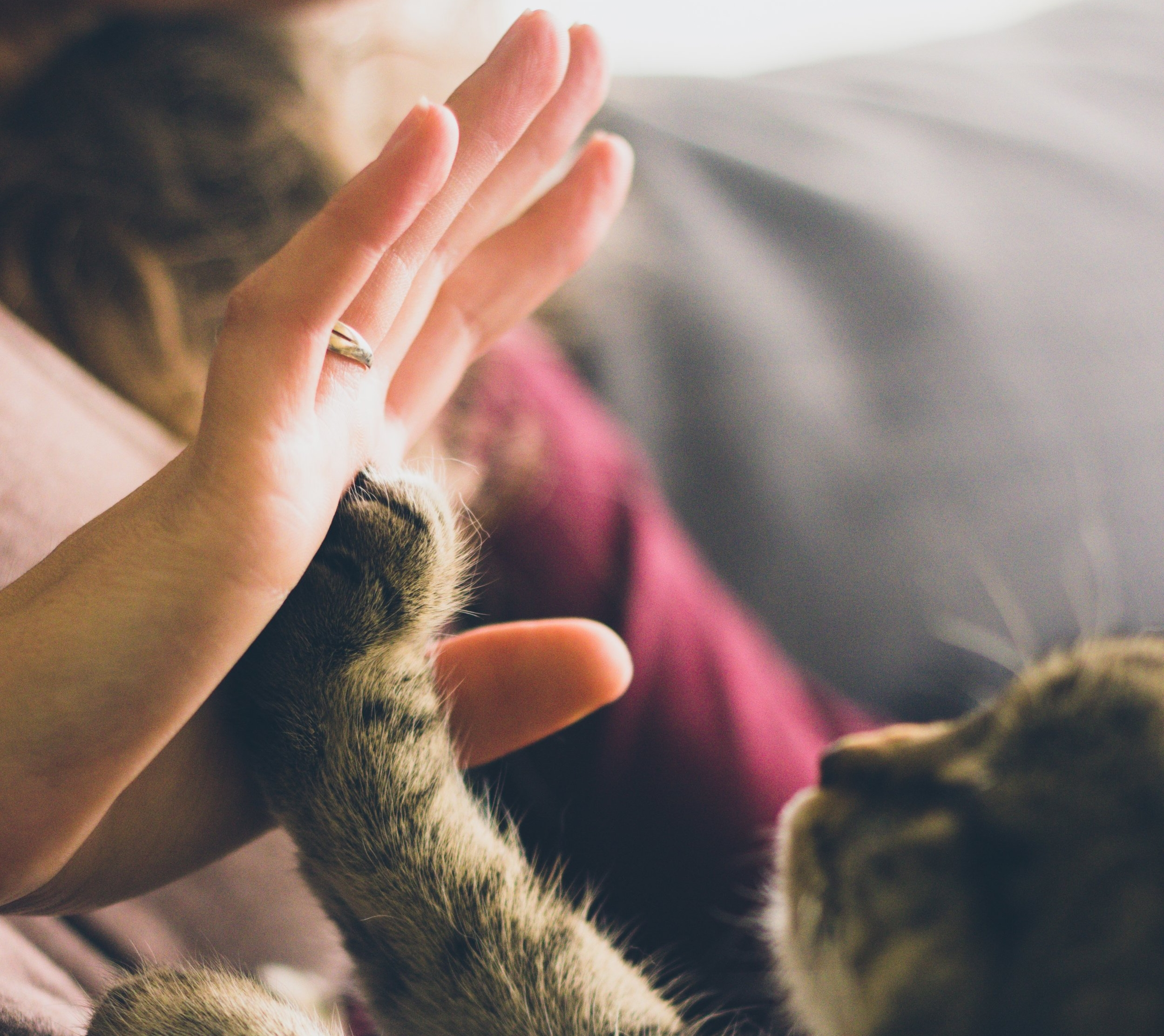 Yes, high-fiving your cat counts as a silly celebration.