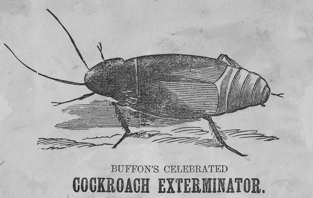 Detail from Buffon's Celebrated Cockroach Exterminator [advertisement], 1876. Source: Victorian Patents Office Copyright Collection, State Library of Victoria (H96.160/2243). Buffon is not thought to have made a Celebrated Panda Exterminator as demand was not sufficient.