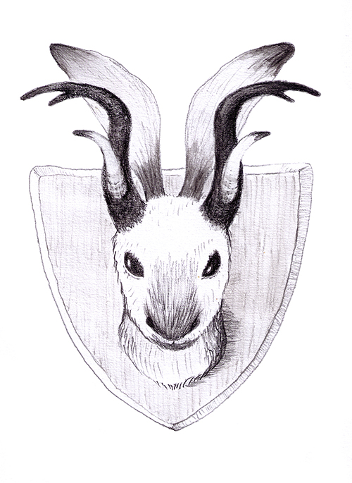 I drew this creature to show Wheeler, as it sounded very much like his jackalope. Only I saw this on the wall of a chalet in the Alps, before the war—the owner said he caught it in a snare, in the woods behind his house.