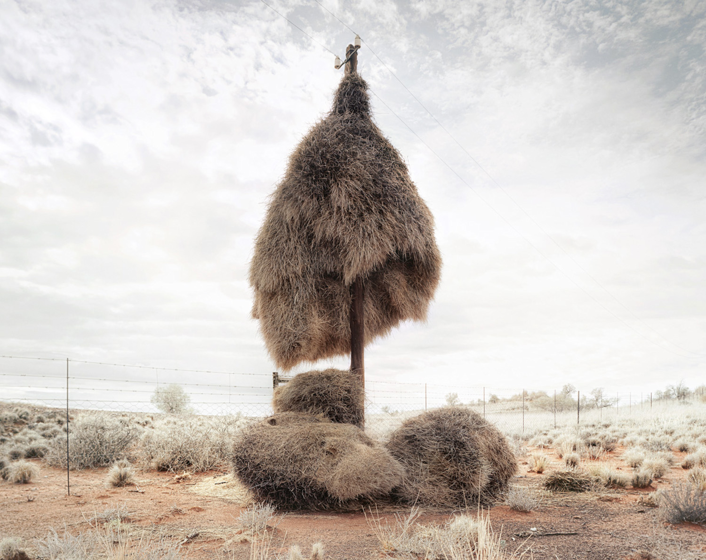 African Photography Network Dillon Marsh7.jpg