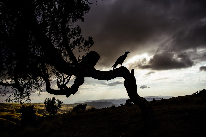 African Photography Network Tahir Carl Karmali22.jpg